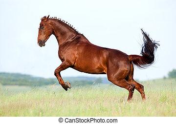 castanha, campo, cavalo, corridas, galope