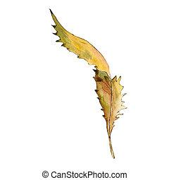 castanha, estilo, isolated., doce, folhas, aquarela
