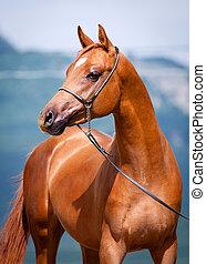 castanha, jovem, cavalo, retrato