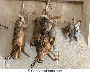 Hunting trophies hanging on the kitchen wall in Castelnaud Castle, medieval fortress at Castelnaud-la-Chapelle, Dordogne, Aquitaine, France
