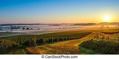 castelo, em, bordeaux, vinhedo, amanhecer