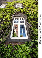 castelo, janela, antigas, reflexão, krakow.