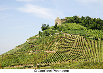 Castle on a vineyard - Castle ruin on a vineyard in Staufen...