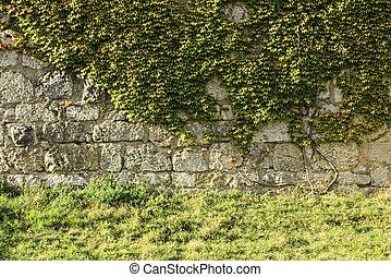 Castle walls with Boston Ivy (Parthenocissus tricuspidata).