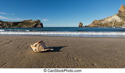 Castlepoint Seashell Beach