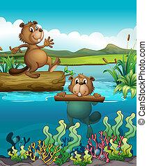 castori, fiume, due, profondo