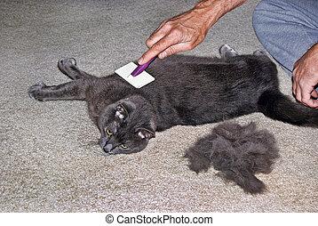 Cat A Comb - Man grooming a tomcat.