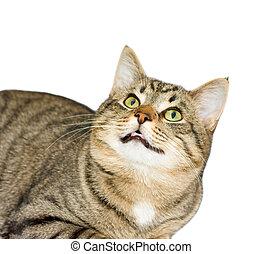 cat, a portrait