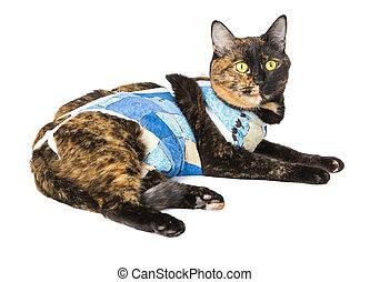 Cat after operation sterilization