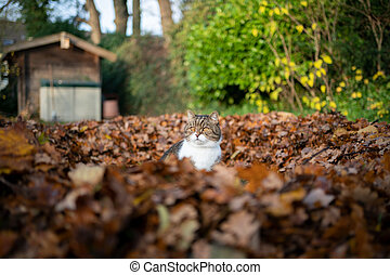 cat amidst autumn leaves outdoors
