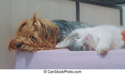 cat and a dog are lifestyle sleeping together funny video....