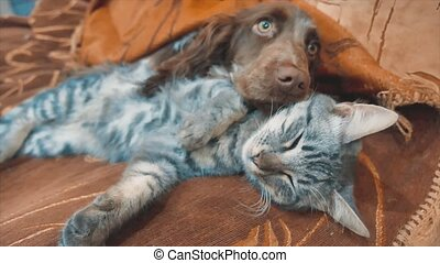 cat and a dog are sleeping lifestyle together funny video....