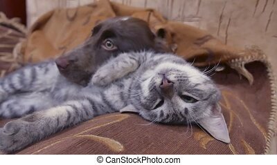 cat and a dog are sleeping together funny indoors video. friendship cat and dog