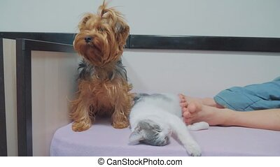 cat and a dog are sleeping together funny video. cat and dog...