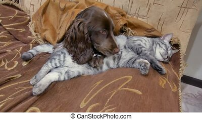 cat and a dog are sleeping together funny video. friendship...