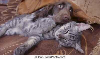cat and a dog are sleeping together funny video indoors....