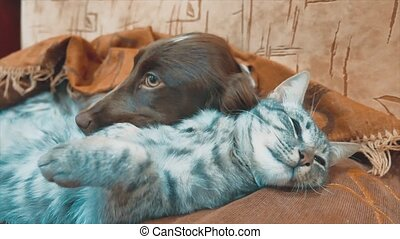 cat and a dog are sleeping together funny video. lifestyle...