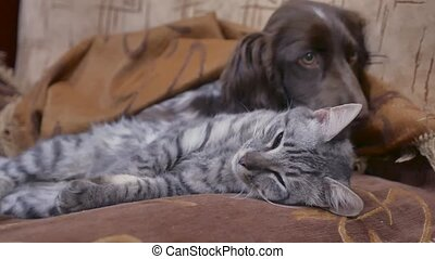 cat and a dog are sleeping together indoors funny friendship video. cat and dog