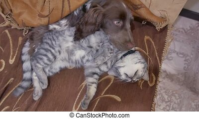 cat and a dog are sleeping together indoors funny video....