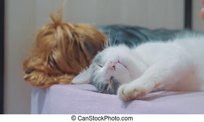 cat and a dog are sleeping together lifestyle funny video....