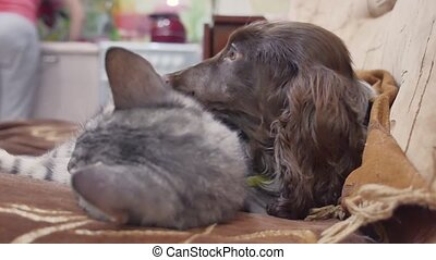 cat and a dog friendship are sleeping together indoors funny...