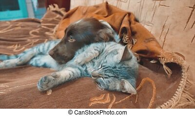 cat and a dog lifestyle are sleeping together funny video....