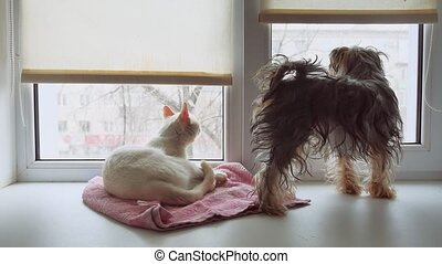 cat and a funny dog Yorkshire Terrier sitting on the sill of a window pet