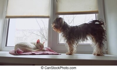 cat and a funny dog Yorkshire Terrier sitting on the sill pet of window