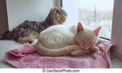 cat and a funny dog Yorkshire Terrier sitting pet on the sill of window