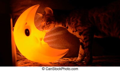 Cat and a lamp in the form of the moon.