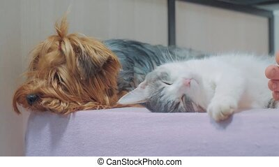 cat and a lifestyle dog are sleeping together funny video....