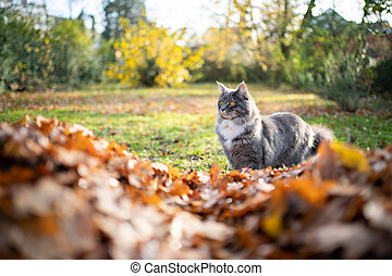 cat and autumn leaves in garden