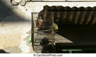 cat and bird cage