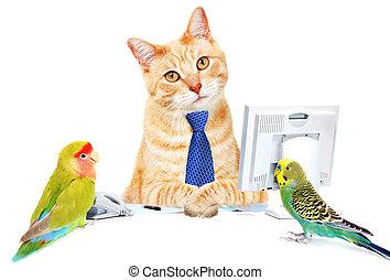 Cat and birds.