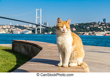 Cat and Bosporus bridge in Istanbul
