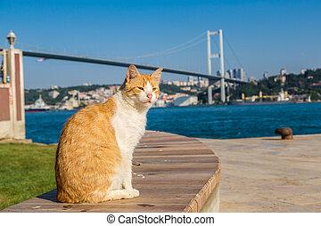 Cat and Bosporus bridge in Istanbul