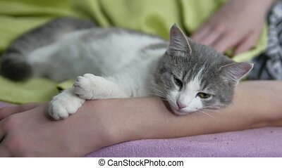 cat and boy teenager sleeping together friendship love pet...