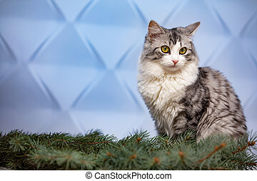 Cat and branch of a Christmas tree on a blue background.