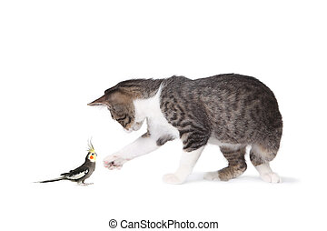 Cat and Cockatiel - Image of tabby cat and cockatiel looking...