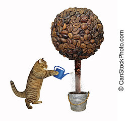 Cat and coffee tree