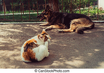 Cat and dog. A dog and a cat lie side by side
