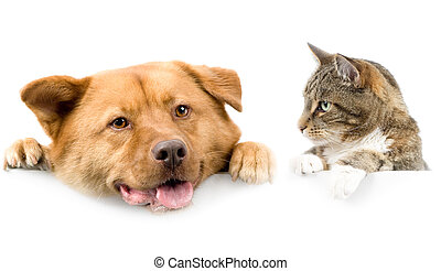 Cat and dog above white banner - Cat looking at dog above...