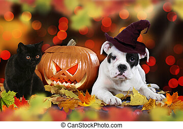 cat and dog beside pumpkin