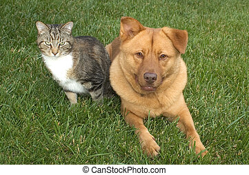 cat and dog on the grass