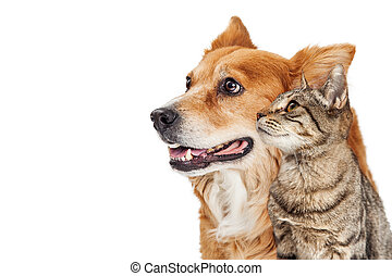 Cat and dog closeup looking Side