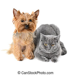 cat and dog - Dog and cat on white background