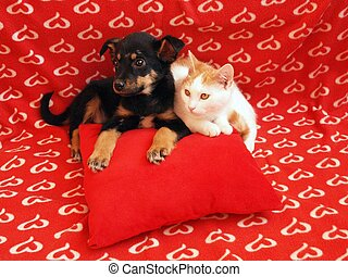 Cat and dog: friendship - Two friens in the red home.