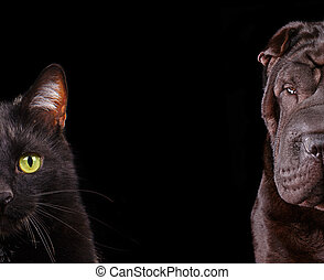 Cat and Dog - half of muzzle close up portraits