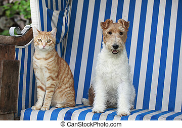 Cat and dog in a beach chair