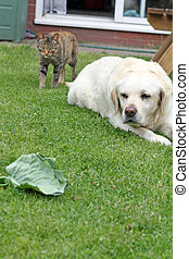 cat and dog in the garden